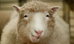 sheep3.jpg